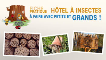 hotel insecte